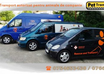 Transport animale de companie